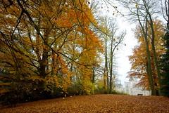 1-IMGP7549 (PahaKoz) Tags: park autumn tree castle nature bench foliage czechrepublic           zmekhlubok