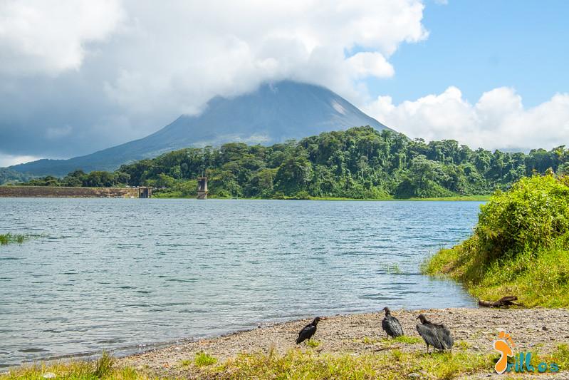 Zopilotes e o Vulcão Arenal
