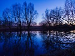 Blue Ruhr Frndenberg, Germany (Thomas Kriehn Photography) Tags: blue tree water reflections river germany deutschland wasser sonnenuntergang sundown olympus 365 blau ruhr ruhrgebiet baum omd reflektion frndenberg thebluehour ruhrpott project365 flus 365days em5 ruhrvalley 365daysproject 365tage 3652015