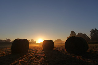 EARLY MORNING ON THE FARM