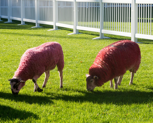 As I Had Met These Sheep I Decided Not To Have Irish Stew For Lunch  - Web Summit Dublin 2014 Ref-1002