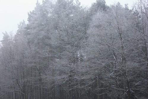 "Im Winterwald (mit Schnee) 2015 • <a style=""font-size:0.8em;"" href=""http://www.flickr.com/photos/69570948@N04/15720844803/"" target=""_blank"">View on Flickr</a>"