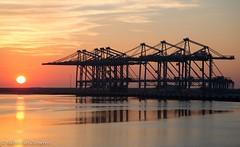 #maasvlakte2 #crane #container #zpmc #rotterdam #rwg #terminal #apm #holland#port (michelvanzomeren) Tags: holland port rotterdam crane terminal container apm rwg zpmc maasvlakte2