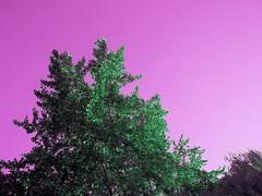 (Cakes Photo) Tags: nature colors landscape photography washington surreal dreams lakewashington pacificnorthwest trippy psychedelic dreamscape photographersontumblr