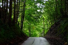 Baviera (7) / Alemania (Ull mgic) Tags: naturaleza germany arbol tirol fuji natura bosque alemania arbre bosc fssen baviera xt1