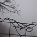 Barbed wire and branches on a foggy morning