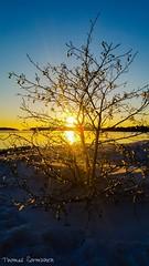 -13C (tume777) Tags: christmas winter sunset sea sky sun cold tree ice beautiful talvi joulu silhuette 13c kylm