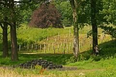 June 2014 (RoystonVasey) Tags: park sculpture david west canon eos zoom yorkshire usm nash 70300mm ysp 400d