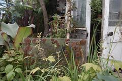 Plant Explorer's Garden (josephowle) Tags: flowers plants scotland chelsea gardening chelseaflowershow gardeningscotland scottishagriculturalcollege plantexplorer