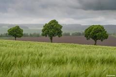 31052016-_DSC0085 (vidjanma) Tags: arbres paysage crales