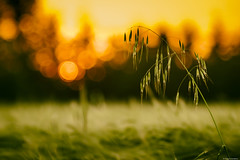 Megic of Vintage... (Stefano Scardazza) Tags: sunset vintage tramonto 28 meyer lenses 135mm grano orestor
