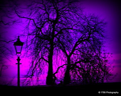 Night time in Paisley (Rollingstone1) Tags: colour tree art lamp night landscape scotland outdoor serene paisley