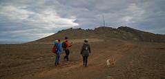 4mai_Thorbjorn_015 (Stefn H. Kristinsson) Tags: dog mountain dogs iceland spring hiking may ma vor hundur sland ganga fjallganga tamron2875mm grindavk hundar grindavik orbjrn nikond800 thornbjorn orbjarnarfell