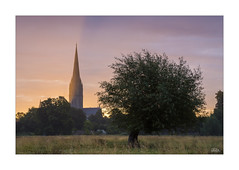 Light Beams (JRTurnerPhotography) Tags: city uk greatbritain trees england mist southwest building church nature architecture sunrise canon print landscape photography dawn countryside photo europe cityscape photographer cathedral image unitedkingdom britain religion picture spire photograph lee gb fields salisbury tall colourful sunrays wiltshire bushes salisburycathedral lightbeams lonetree westcountry landscapephotography watermeadows leefilters canon24105mmf4lis religousbuildings jaketurner canon5dmarkiii leegradfilters visitwiltshire jrturnerphotography