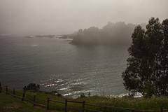 Fog at Little River (San Francisco Gal) Tags: mist tree rock fog fence wave pacificocean mendocino littleriver