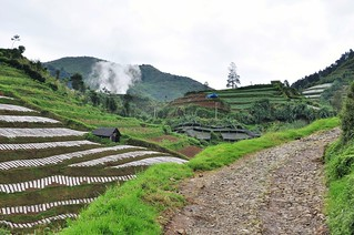 dieng plateau - java - indonesie 34