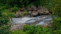 _DSC4807 (rosarioc62) Tags: munnar hill station india landscapes stream hills waterfalls bridge