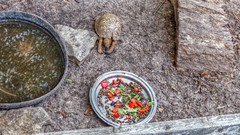 P1020969j (jmctuna) Tags: summer newyork water vegetables animals fruit zoo eating tortoise shell pan hdr cracked ecologycenter easternboxturtle holtsville jmctuna