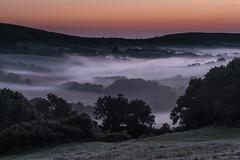 Sunrise on the way to Kimmeridge (tonycross88) Tags: kimmeridge dorset mist fog d750 leefilters trees firstlight