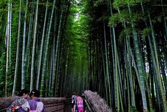 Bamboo road (tez-guitar) Tags: road leica wood trees summer tree green forest temple kyoto bamboo leicax1