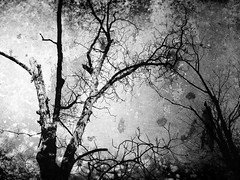 Dead Trees (Rossdxvx) Tags: trees blackandwhite abstract tree art texture nature silhouette contrast rust experimental noir shadows michigan metallic surrealism surreal overlay textures overexposed minimalism blight textured