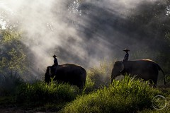 Into the mist - Elephant