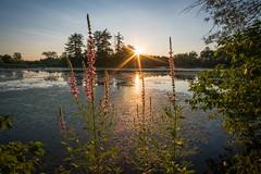 Summer Sunset (Seth J Dewey Photo) Tags: minefallspark nashua newhampshire evening scenic summer sunset water sun