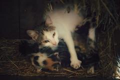 keep em safe ( Nino) Tags: cats pets film field animal animals analog cat 35mm canon 50mm nikon dof bokeh kitty kittens s mm manual nikkor 50 35 depth ai f12 f12s