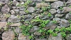 lnz . (tlraum) Tags: linz farn granit steinmauer naturstein rolandbarthofer