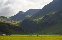 Out to Pasture (Matt Champlin) Tags: iceland skogafoss mountains horses pasture farm farming nature outdoors landscape rugged beautiful canon 2016 peaceful summer summertime huge towering