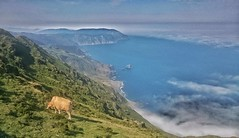 The Cow (CiccioNutella) Tags: cliffs acantilados spain galicia cow nature sea seascape landscape vixia herbeira carino mirador sonyxperiaz3compact sonyz3 smartphone