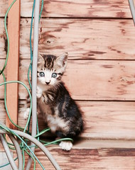 I'm not your enemy! A stray cat_7DWF Fauna (keiko*has) Tags: betweenvendingmachines park straycat 7dwf fauna