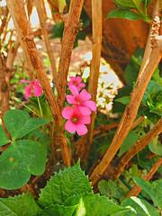 20161012_111159_HDR (Rodrigo Ribeiro) Tags: jardim jardinagem garden gardening flor flores flower