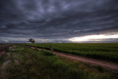 Lonely Tree (vcostanz) Tags: tree lonelytree farm elmore fence grass victoria australia darkclouds clouds leaningfence post fencepost sunset cloudy landscape singletree lonetree greengrass sky cloudysky leaningpost