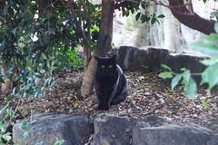 Today's Cat@2016-10-15 (masatsu) Tags: cat thebiggestgroupwithonlycats catspotting pentax mx1