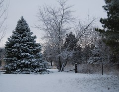 Winter sunset on a snowy landscape. (Gerald Barnett) Tags: blue winter sky usa snow nature fence landscape grey illinois weeds nikon wintersunset gray tranquility atmosphere naturallight bluesky monochromatic serenity evergreens sunsetglow wintertime spruce tranquil greysky winterwonderland snowscape snowcoveredtrees snowontrees cloudlesssky sprucetree naturalcolor treeswithsnow rusticfence sunsetinwinter