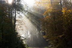 Sunshine (bertrandwaridel) Tags: november autumn trees sun mist sunshine fog forest switzerland suisse brume vaud 2014 echallens