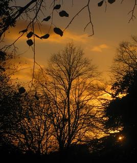 Autumn Silhouettes