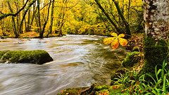Defying gravity a while longer (Yay!! 1 million views today!!) (Keith in Exeter) Tags: autumn trees nature water yellow rock river landscape flow island gold leaf nationalpark moss stream devon final le solitary dartmoor teign