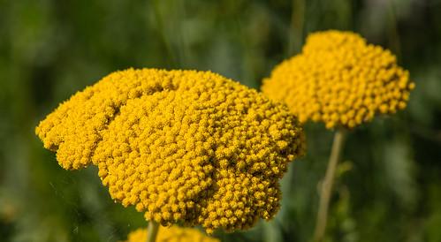Blüten im Sommer