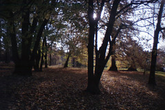 (cedrictega) Tags: park autumn shadow fall analog la lomography sardina lyon lightness
