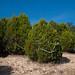 Trees_of_Loop_360_2014_040