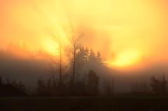 Maple Ridge BC (Ian Threlkeld) Tags: nov november autumn trees sky orange sun canada fall nature sunshine fog sunrise fire golden solar nikon scenery bc bright britishcolumbia foggy scene mapleridge foggymorning lowermainland ridgemeadows d7000