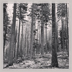 Bavaria (Daniel James Greenwood) Tags: mobilephone mobilephonephotos instagram instagramphotography nokialumia