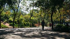 Tianhe Park. Jan 1, 2015 (SouthernSky24601) Tags: guangzhou zeiss raw zoom sony adobe fullframe alpha za ultrawide a7 canton lightroom  oss carlzeiss    cmos  arw   mirrorless  tianhepark vsco variotessart   emount  opticalsteadyshot  e ilce7  fe1635 sel1635z