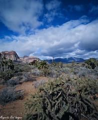 Spring Mountain Ranch (magnetic_red) Tags: cactus clouds desert flag nevada blueskies redrock americanwest expiredfilm pentax67ii ektachrome100eg