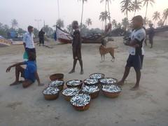 Morning Catch (Eustaquio Santimano) Tags: india fish beach fishing fishermen goa colva