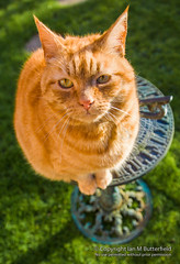 POTD Cattitude!: Sam, a ginger tom cat sitting on a sundial (Ian M Butterfield) Tags: shadow people pet cats pets clock animal animals gardens cat garden mammal ginger feline sitting shadows sam time libraries frombelow fromabove lookingup business sundial sundials domestic hours felines sat lookingdown mammals seated overhead footprint sits licence minutes seconds butterfield tomcat moggy tomcats gardenfeature rightsmanaged placemark alamy propertyrelease photographersdirect ianandann footprintsfootstepsfootstep