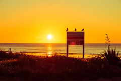 Three LiTTLE BiRDS  (m+m+t) Tags: sunset sea newzealand sun beach birds silhouette coast signage mmt raumatibeach canon70d meredithbibersteindesign boxingday2014