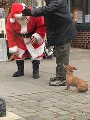NOPE (scaredsquee) Tags: santa dachshund ween wienerdog doxie oceangrove oceangrovenj